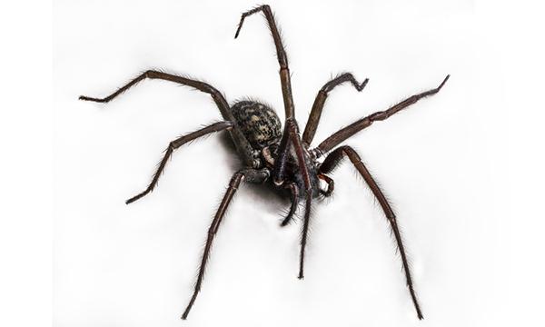 Help, een spin!