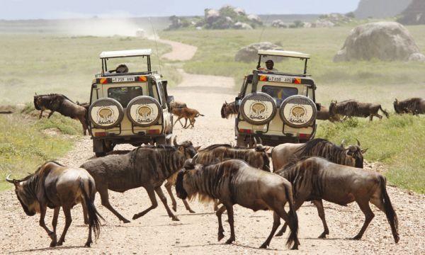 Eindeloze mogelijkheden met Jambo Safari Club