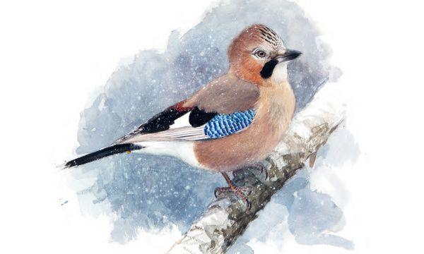 Wintervogels: Aquarellen en observaties van Lars Jonsson