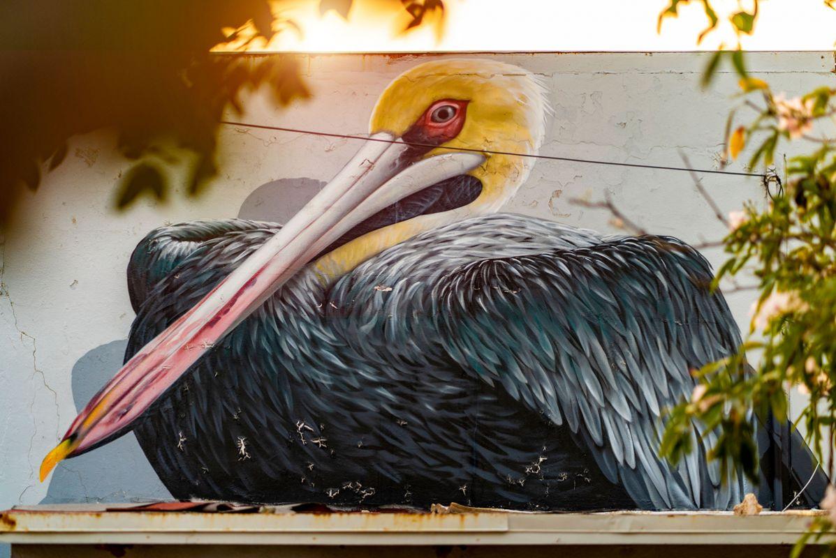 Pelican Aruba Happy Lourens Magazine